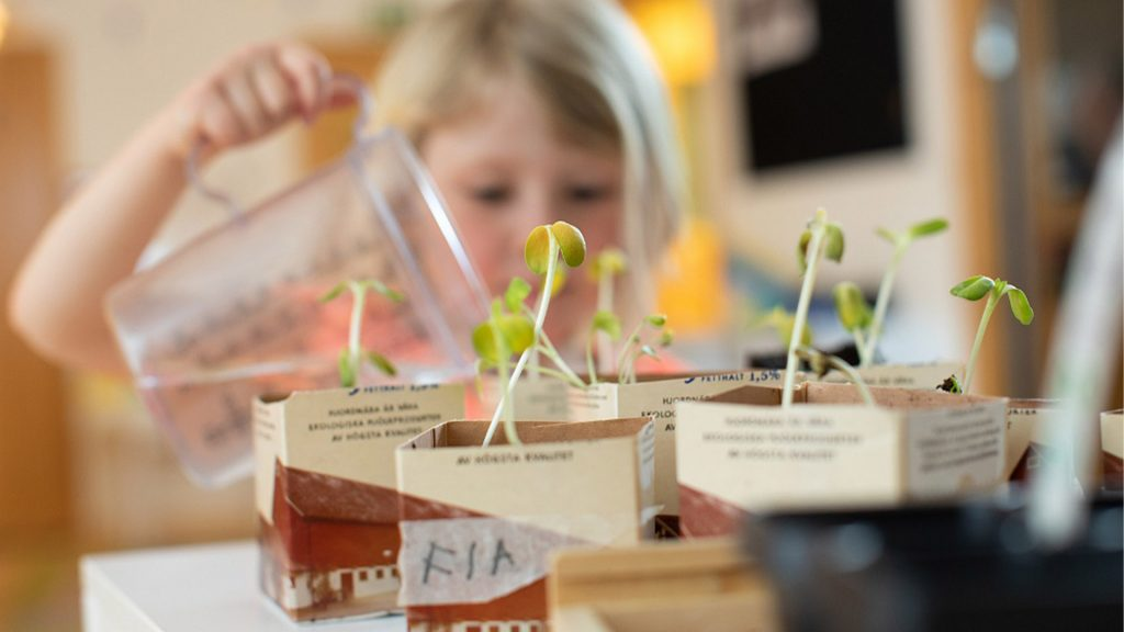 Barn vattnar växter som växer från mjölkpaket
